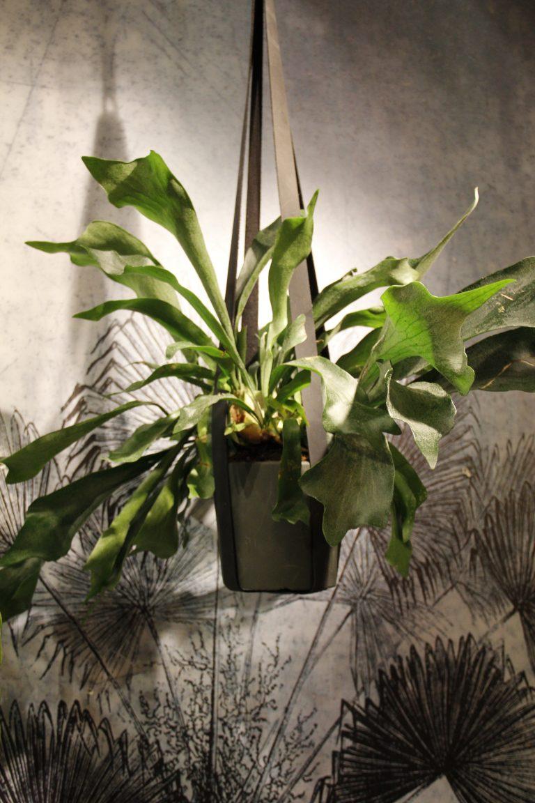 leren plantenhanger
